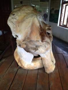 Elephant's Skull Left