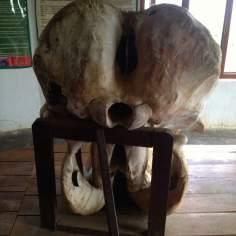 Elephant's Skull Rear