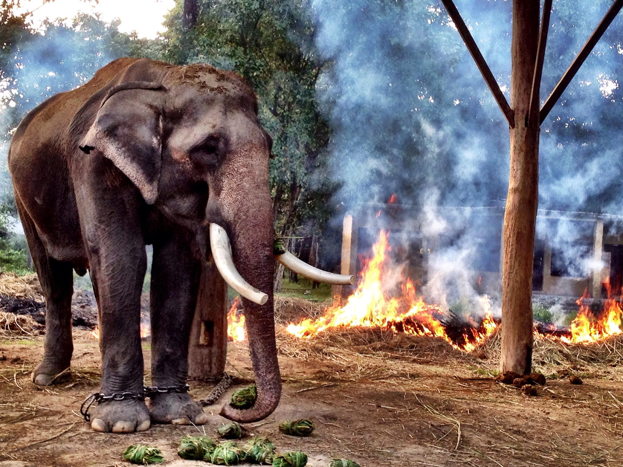 elephant women porn photo